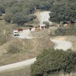 SMFY-San-Agustin-ons-uitzicht--boer-haalt-koeien