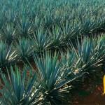 Tacos Tequila Mezcal
